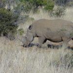 Safári na África do Sul: quanto custa e como é a experiência?